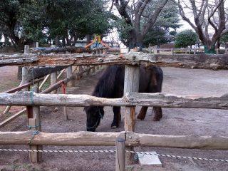 館林でけものフレンズ?9月17日は小動物とのふれあいin中央公園!!