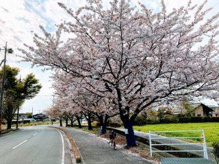 今週の館林 2021年4月5日〜